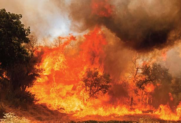 Explosive flames chew through the brush along Placerita Canyon Road near the Nature Center.