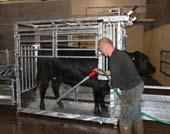 gate for all animal sizes Neck Inspection gate allows easy neck inspection for TB